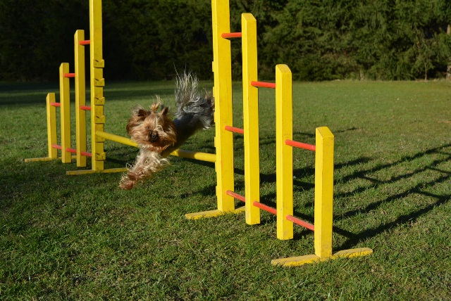 Agility_Jumping_web
